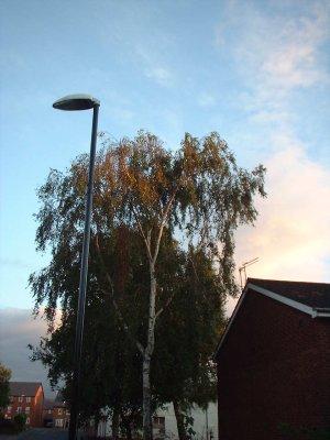 Autumn 39