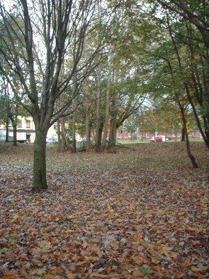 Autumn 107