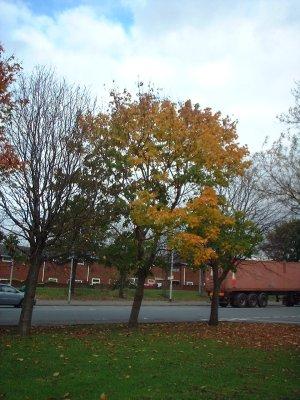 autumn 108