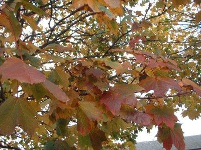 Autumn 110