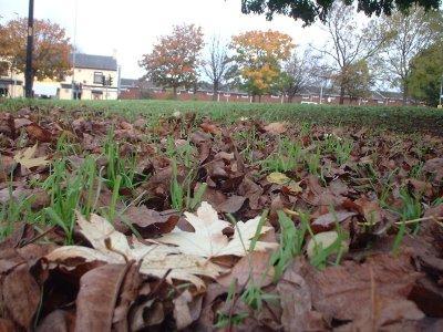 Autumn 112
