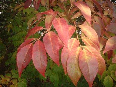 Autumn 70