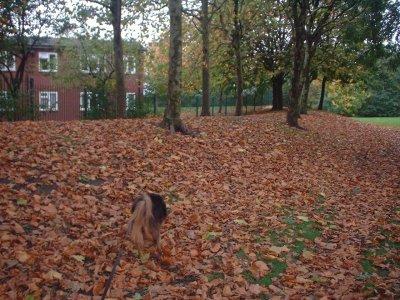 Autumn 72