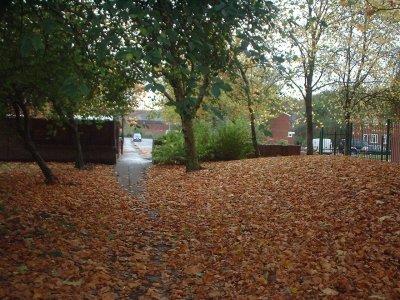 Autumn 73