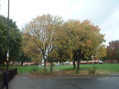 Autumn 74