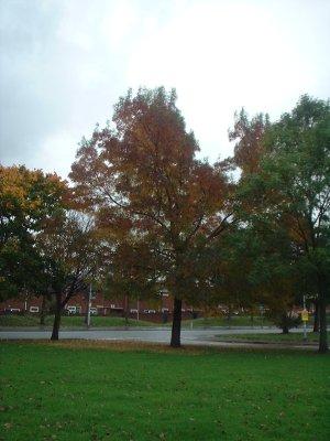 Autumn 76