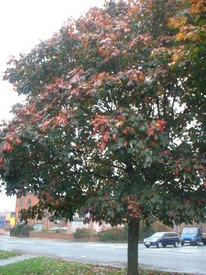 Autumn 78
