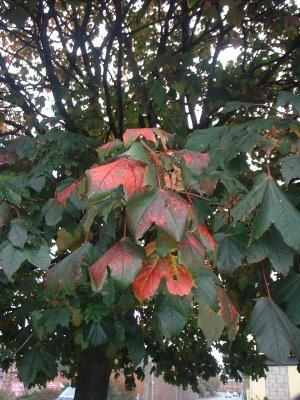 Autumn 79