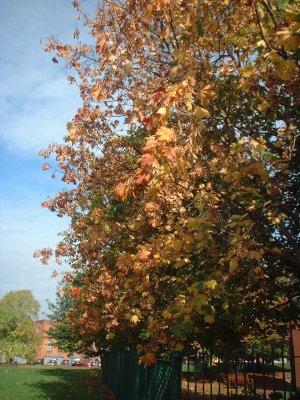 Autumn 80
