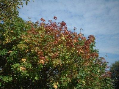 Autumn 81