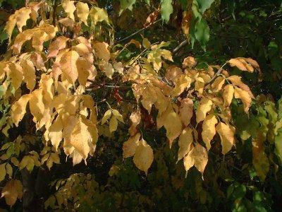 Autumn 84