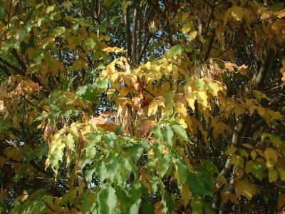 Autumn 85