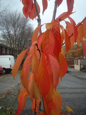 Autumn 97