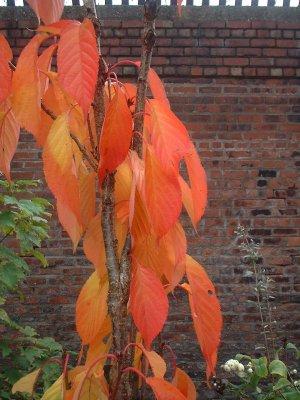 Autumn98