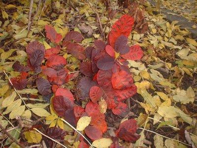 Autumn 114