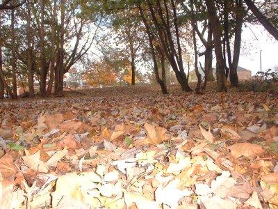 Autumn 116