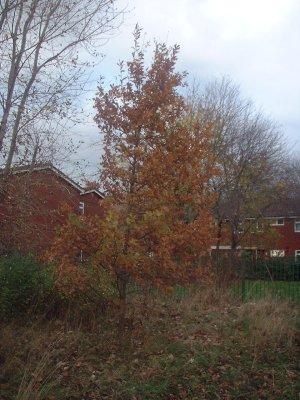 Autumn 130
