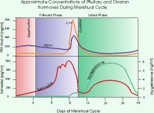 oestrogenandprogesterone